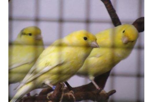 Weisse und gelbe