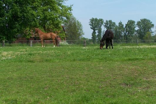 Pferdebox frei! In