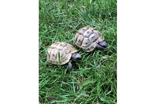 Landschildkröten von 2014