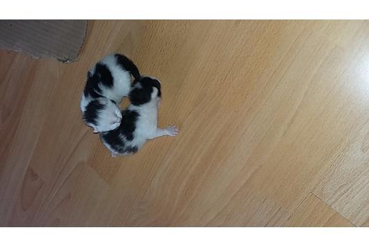Baby Katzen 2