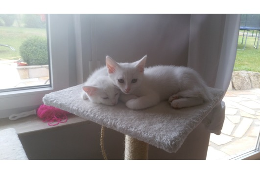 Kleine Kitten suchen