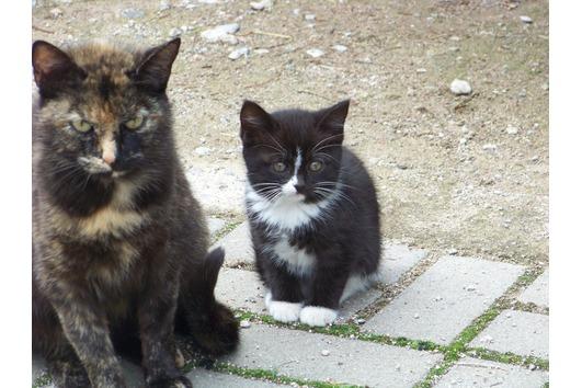 3 kleine Kätzchen