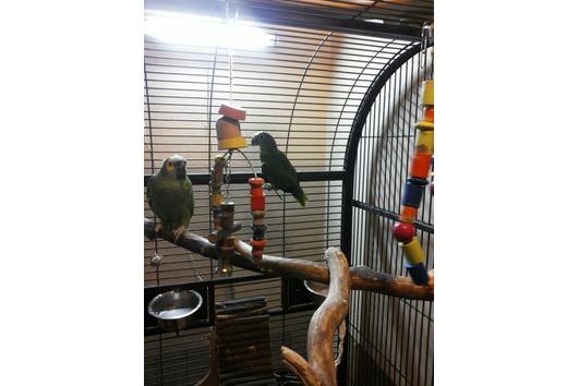 Papageien mit Voliere/
