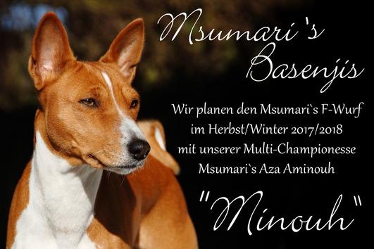 Msumari`s Basenjis -