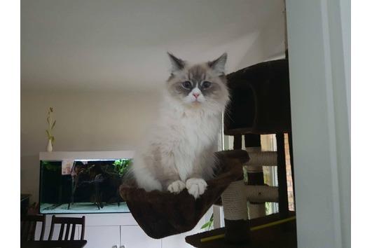 Katze vermisst seit