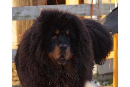 Tierschutzhund aus China