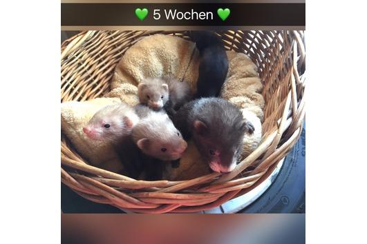3 kleine Kobolde