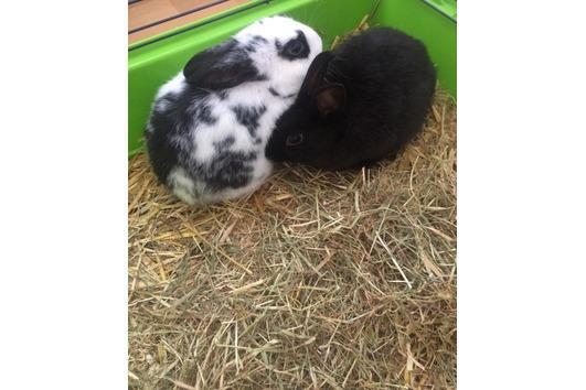 2 Kaninchen zu