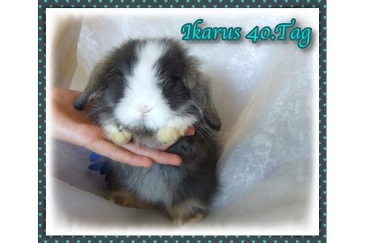Teddywidder Baby Kaninchen