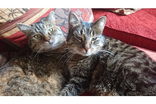 2 wundervolle Katzen