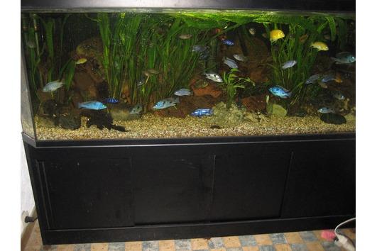 Aquarium Deltec 1200
