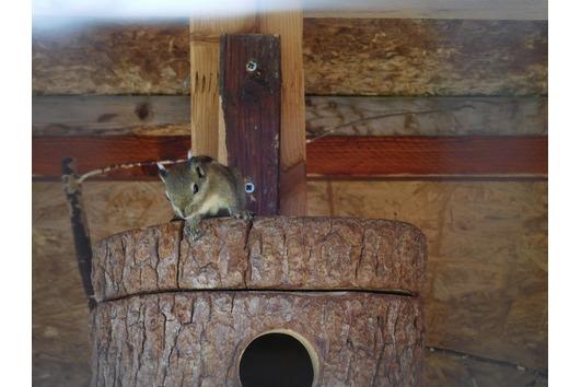 Biete chinesische Streifenhörnchen