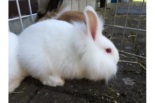 Kaninchenbabys 11 Wochen