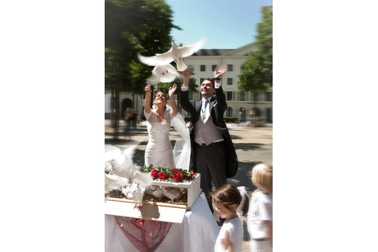 Hochzeitstauben weisse Tauben