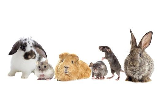 Liebevolle Kleintierbetreuung