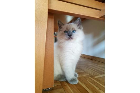 Katzenbabys: verkaufe 3
