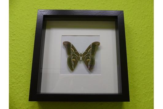 Tausche gern! Schmetterlingsrahmen