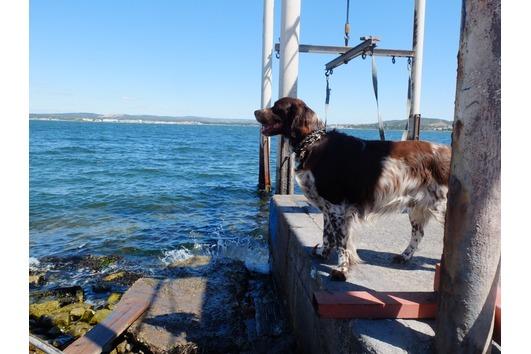 Hundebetreuung auf Gegenseitigkeit