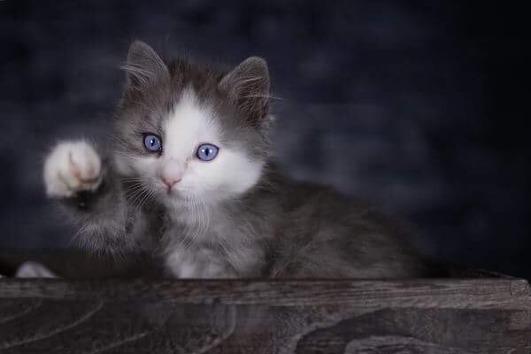 Sie lieben Blaue