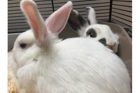 Kaninchen inkl. Zubehör,