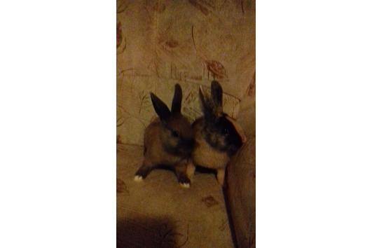 2 süsse Kaninchenbabys