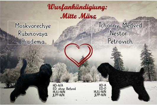Russischer Schwarzer Terrier -