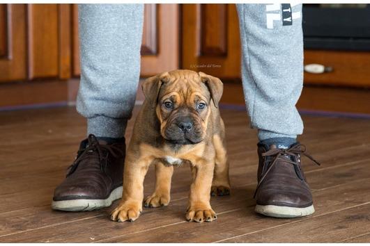 Puppies Ca de