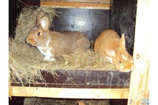 Kaninchen-Mix