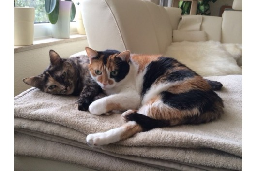 Liebevolles Katzengeschwisterpaar (8