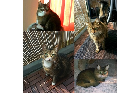 Katzen - Geschwisterpärchen suchen