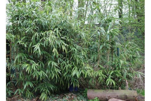 Topfpflanzen Verschenken pflanzen verschenken in hannover pflanzen garten günstige