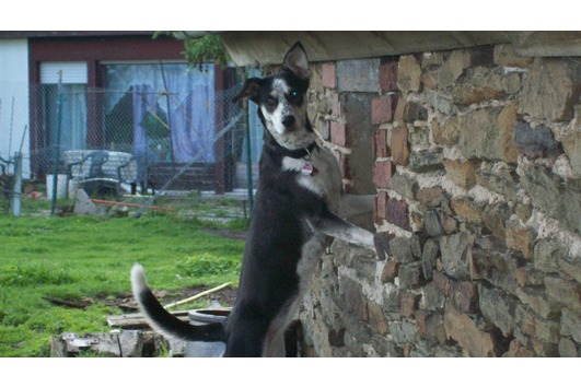 Welpe / Hund